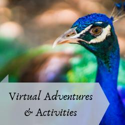 Virtual Adventures & Activities